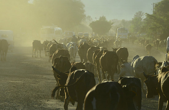 shoba gopinath Evening traffic, Arba Minch, Ethiopia
